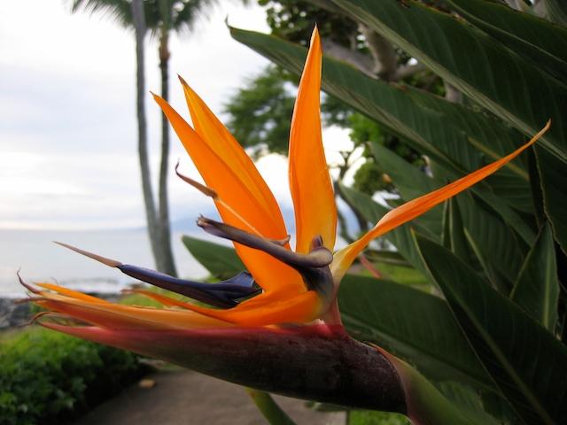 Bird_paradise