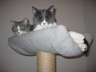 Grumpy_cats_1